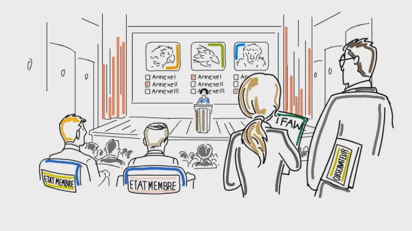 Capture d'écran d'une vidéo explicative dessinée, film qui donne de manière précise et concrète les avantages d'un produit ou d'un service à travers une histoire racontée.